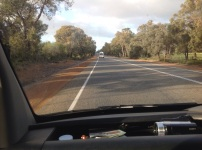 Rijden tussen de eucalyptusbomen