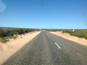 Lage struiken en een gele weg