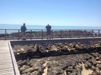 Boardwalk over de Stromatolieten