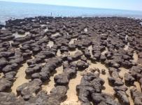 Stomatolieten van Hamlin Pool