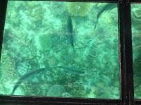 Coraal en vissen in Coral Bay