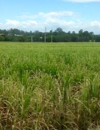 Grafton ligt in het Suikerriet gebied