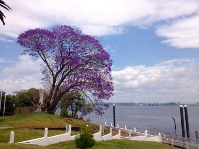 Uitzicht bij de hoteltuin Ulmarra