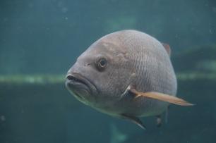 Pet Porpoise Pool