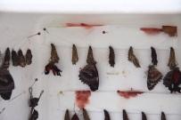 Vlinderpoppen in diverse stadia