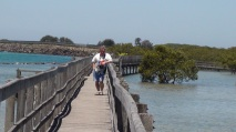 Boardwalk urunga