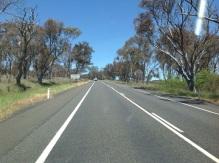 Dorre bomen onderweg