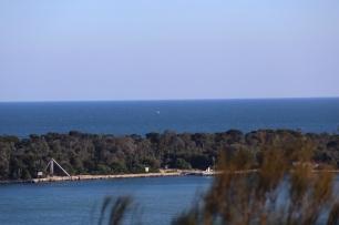 Walvis bij Lakes Entrance