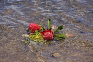 Bloemen in de rivier