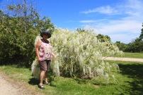 Seawind Garden