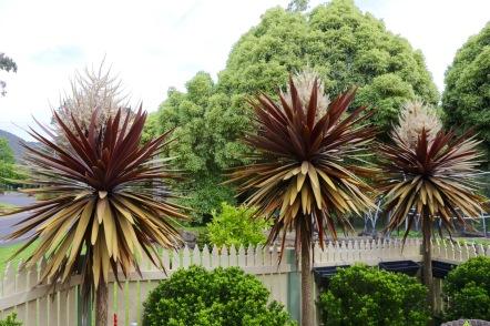 De palmbomen van Thea