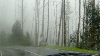 Hoge bomen in de mist