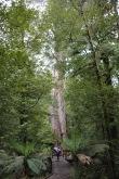 Ralph bij de Ada Tree