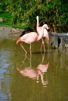 1.1459536485.flamingo-s