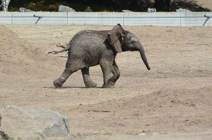 Kleine Madiba in Safaripark Beekse Bergen