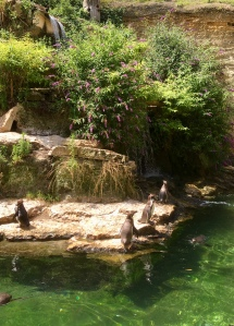 Pinguins in de Zuid Amerikaanse voliere