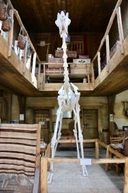 Giraffen skelet