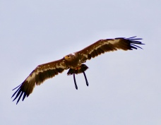 Vogelshow Zoo de Beauval