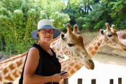Bij de giraffen