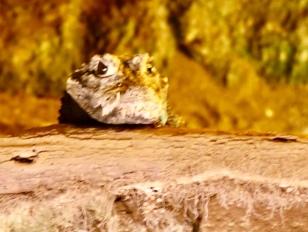 Kiekeboe, ik ben een kleine krokodil!