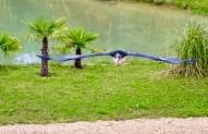 Vogelshow Zoo de Beauval, Maraboe