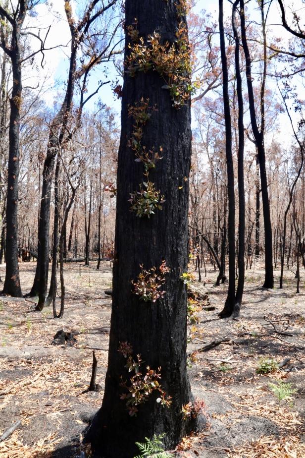 Er is hoop... na amper 4 weken lopen sommige bomen weer uit...