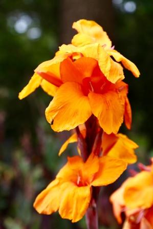 Bloemen in de tuin van de Homestead