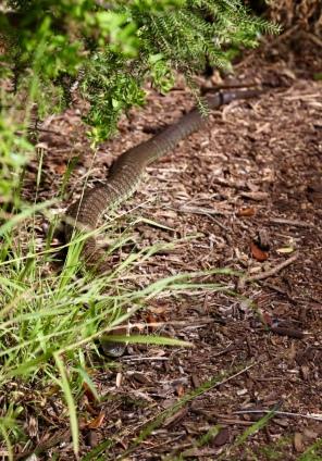 Grote slang op ons pad