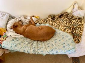 Goldie op haar bed