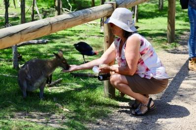 Wallaby voeren
