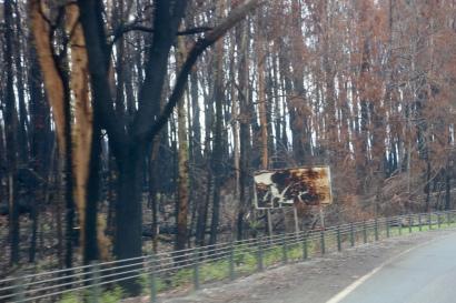 Verbrand gebied onderweg